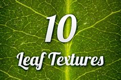 Leaf Textures Pack 1 ~~ Instantly enhance your designs with this set of 10 leaf textures.  These 10 high resolution textures are perfect for both print and web.