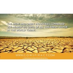 A recycled graphic, but it needs repeating.  #cowspiracy #cow #agriculture #drought #water #milk #dairy #meat #beef #environment #planet #california