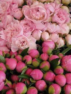 Rosas belas que só