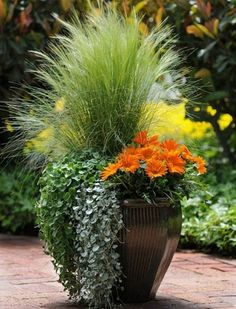 Container Gardening Ideas Orange Surprise, by Ball Horticultural Container Size: 14 inches, Exposure: Sun New Day™ Clear Orange gazania Emerald Falls dichondra Silver Falls™ dichondra Pony Tails Mexican feather grass Fall Planters, Garden Planters, Balcony Garden, Flowers In Planters, Large Garden Pots, Outdoor Plants, Outdoor Gardens, Potted Plants Patio, Backyard Plants