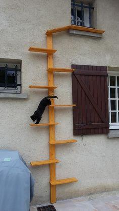 Billedresultat for cat stairs