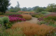 """Piet Oudolf - The """"New Perennial"""" movement. Pensthorpe Garden shown here. Also involved in the Highline and the 2011 Serpentine Gallery."""