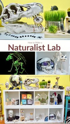 Whether you're decorating a classroom or a living room, there are simple ways to turn your space into a naturalist lab with themed science decor. Diy Crafts For Tweens, Fun Crafts To Do, Kids Crafts, Science Fair, Science Nature, Science Classroom Decorations, Rainy Day Crafts, Teen Room Decor, Natural Home Decor