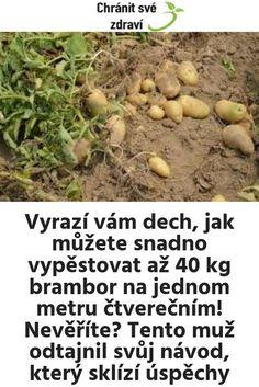 Vyrazí vám dech, jak můžete snadno vypěstovat až 40 kg brambor na jednom metru čtverečním! Nevěříte? Tento muž odtajnil svůj návod, který sklízí úspěchy Beans, Vegetables, Food, Gardening, Essen, Lawn And Garden, Vegetable Recipes, Meals, Yemek