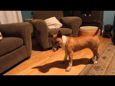 ▶ Bull Terrier tries New method to retrieve ball - YouTube