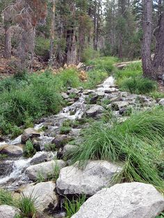 Slushy Meadows (San Gorgonio Wilderness).  This is what I always thought Ithilien looked like.