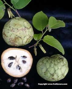 Cherimoya. Greenish black rind hides the most delicious white flesh filled with big seeds. Tastes more like a complete dessert than just plain fruit. I want more of this one!