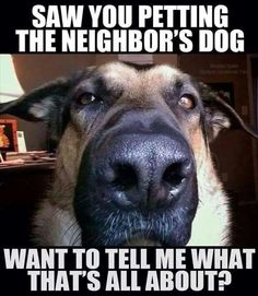 Saw you petting the neighbors dog...