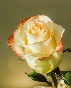 Apaixonados por flores