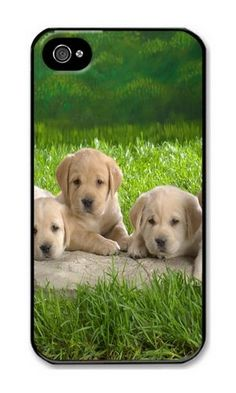 iPhone 4/4S Case DAYIMM Animals Dogs Nature Puppies Black PC Hard Case for Apple iPhone 4/4S DAYIMM? http://www.amazon.com/dp/B012IPOCKI/ref=cm_sw_r_pi_dp_C6cmwb085V9J3