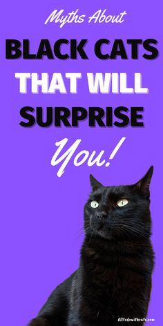 There are plenty of myths surrounding black cats, some good and some bad. If you want to know why are black cats lucky and dispel negative myths read this post to discover more. #blackcatsgoodluck #luckyblackcat #blackcat #blackcatmyths #catfacts