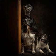"""""""Can we come in yet""""? by John Ferrett - Photo 186826679 / 500px"""