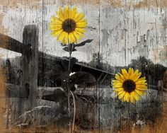 Rustic Sunflower Country/Farmhouse Home Wall Art Decor Matted Picture  Status: Available!  ...