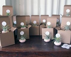 shower // air plant party favors // qty 25 by peacocktaco on Etsy, $155.00
