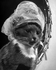 From an unpublished story about a cat named Monkey and her collection of hats, circa late 1940s. (James Whitmore—The LIFE Picture Collection/Getty Images)