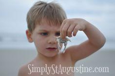 """Crabbing"" {haha} St Augustine Beach"