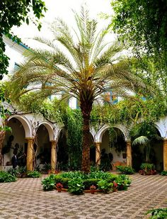 Cordoba,Andalucia, Spain. Moorish style internal courtyard.  This is like the Fonda I stayed at in Cordoba.