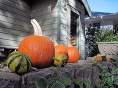 A line of pumpkins welcoming visitors is the perfect fall decoration for Halloween or Thanksgiving! www.fiskars.com