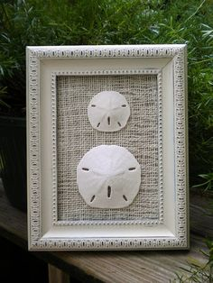 Cottage Chic Sand Dollar Wall Art Sea Shell by OMearasCottageCharm, $24.99