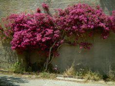 Die Wandler überleben nur mit Blütenpollen, Durchhaltewillen, Humor und nochmals Blütenpollen! www.christina-dabrowski.de
