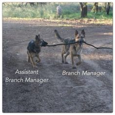 Org chart of the day: assistant branch manager, branch manager - Us Vs Th3m