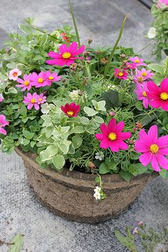 Gulley Custom Container Gardens - All About Container Flowers, Flower Planters, Container Plants, Flower Pots, Garden Yard Ideas, Garden Pots, Gemüseanbau In Kübeln, Window Box Flowers, Outdoor Flowers