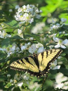 :) Butterfly
