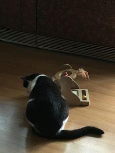 Neues Spielzeug