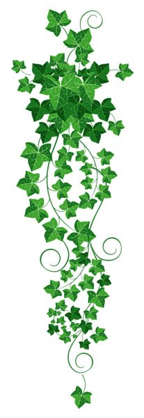 Vine Ivy PNG Clipart Picture