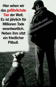 Keine Kampfhunde