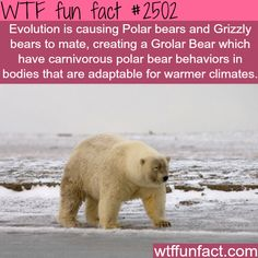 10 Crazy WTF Facts About Bears - World's largest collection of cat memes and other animals Wtf Fun Facts, True Facts, Funny Facts, Crazy Facts, Random Facts, Cool Facts, Strange Facts, Random Things, Random Stuff