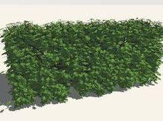 die Hecke= hedge