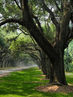 "This image perfectly captures the driveway described in ""The Battered Heiress Blues""✯ The Avenue of Oaks - Wormsloe Plantation - Savannah, Georgia"