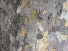 Sycamore June, Boy crazy and lonely. Textile Texture, Wood Texture, Marriage Certificate, Colorful Trees, Tree Bark, Photo Tree, Natural Forms, Design Concepts, Pictures To Paint