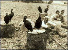 Japanese fishermen and their cormorants. (Image provided by Okinawa Soba)