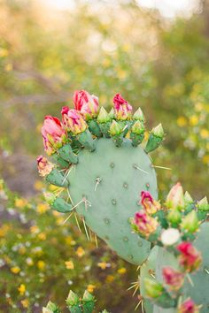 Image gallery by Leah Hope Photography Opuntia Cactus, Prickly Pear Cactus, Wallpaper Wall, Flower Wallpaper, Spring Flowers Wallpaper, Plant Aesthetic, Flower Aesthetic, Cactus Care, Cactus Flower