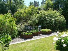 Ett exempel på en mindre odling som smälter ihop med trädgården på ett tilltalande sätt. Med stora, friväxande buskar, odlingslådor i cortenstål och en grusad yta som tydligt avgränsas mot gräsmattan blir det ett lättskött och vackert odlingsrum. Lägg också märke till den stora rabarberplantan till vänster i bild. Garden, Plants, Outdoors, Shape, Ideas, Fit, Lawn And Garden, Gardens, Plant