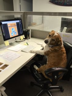 """Work Like a Dog """"I wish I could work like my dogs.  Their job seems to consist of only three things: eat, sleep, play then repeat."""""""