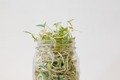 Home Sprouting Guide