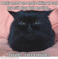 Lol, funny cats! Love them!
