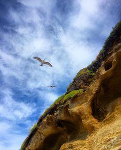 Santa Cruz CA: #birds #seagulls #slope #athens  #crete #gdansk #malaga  #tunis #kiev #vilnius #norwich #praha  #jerusalem #tehran #tokyo #marseilles  #lima #bestofsantacruz #panama #buenosaires #islamargarita  #toronto #santacruztoday #santacruzlife #santacruz  #capitola #sanjose  #santacruznow #visitsantacruz by slawekwojtowicz