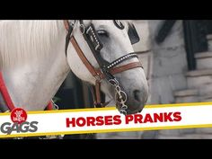 Best Horse Pranks – Just for Laughs Gags …   Bear Tales http://beartales.me/2014/11/10/best-horse-pranks-just-for-laughs-gags/