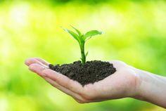 Para que una planta fresca y sobreviva se necesita: Luz, agua, Dioxido de carbono, macro nutrientes (Potasio, nitrógeno, fósforo, azufre, magnesio, calcio), y micronutrientes (Hierro, zinc, boro, manganeso, etc...) Estela Villa 14/mayo/2015