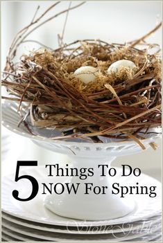 5 THINGS TO DO NOW FOR SPRING