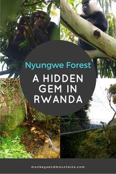 Nyungwe Forest in Rw