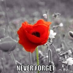 We Will Remember Them - Lest We Forget Remembrance Day Poppy, George Edwards, Poppies, Rose, Flowers, Plants, Forget, Art, Garden