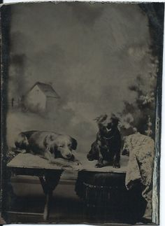 c.1870s 1/6-plate tintype of two dogs in front of photographer's painted backdrop. From bendale collection