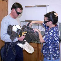 Gary Landers, of Wild Wings Raptor Rehab in Sisters, and veterinary technician Kinta Umphress administering cold laser therapy to an injured adult male bald eagle. photo by Jim Anderson