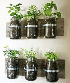 Mason Jar Wall Planter {mason jar} ~ Learn how to create an adorable indoor or outdoor wall planter. These jars would look so cute on a kitchen wall filled with herbs! You can make your own wall planter by using mason jars, an old board, and pipe clamps. Mason Jar Herbs, Mason Jar Herb Garden, Mason Jar Planter, Herbs Garden, Pots Mason, Garden Terrarium, Tea Herbs, Diy Herb Garden, Succulent Terrarium