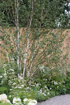 White colour scheme for shade by Makiko Sato with Astrantia major 'White Giant, Geranium 'Kashmir White', white hydrangea, and the annuals Ammi majus and cow parsley. http://www.achicaliving.com/2012/07/hamptoncourt2012/#